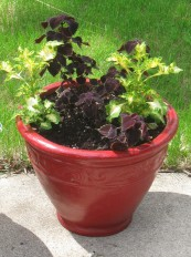"""Old """"New"""" Red Pot"""