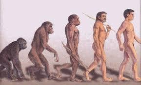 homo erectus (1)
