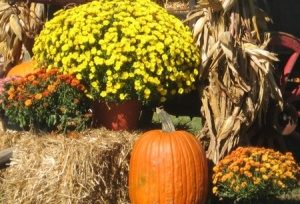 fall-decorations-lara-taylor