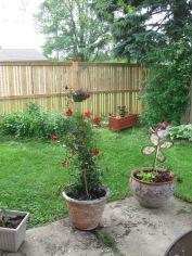 Backyard 2014 004