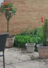 Backyard 2014 007